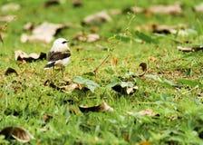 Άσπρο πουλί στοκ φωτογραφίες