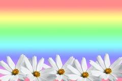 Άσπρο πλαίσιο λουλουδιών κόσμου Στοκ Εικόνες
