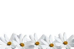 Άσπρο πλαίσιο λουλουδιών κόσμου Στοκ εικόνες με δικαίωμα ελεύθερης χρήσης