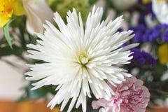 Άσπρο ροζ λουλουδιών στοκ φωτογραφίες