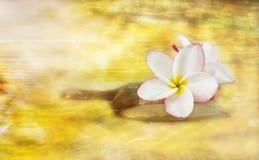 Άσπρο ρόδινο και κίτρινο ευώδες plumeria ή frangipani λουλουδιών Στοκ φωτογραφίες με δικαίωμα ελεύθερης χρήσης