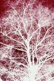 Άσπρο σκιαγραφημένο δέντρο στο κόκκινο Στοκ εικόνες με δικαίωμα ελεύθερης χρήσης