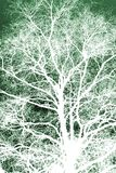 Άσπρο σκιαγραφημένο δέντρο Στοκ Εικόνες