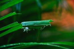 Άσπρο σκουλήκι στοκ φωτογραφίες