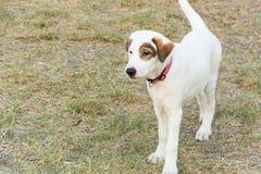 Άσπρο σκυλί στο έδαφος στοκ φωτογραφία με δικαίωμα ελεύθερης χρήσης