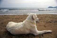 Άσπρο σκυλί στο νησί της Ζάκυνθου στην Ελλάδα στοκ εικόνα