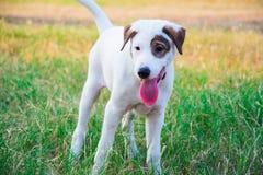 Άσπρο σκυλί στο πάρκο στοκ φωτογραφίες με δικαίωμα ελεύθερης χρήσης
