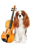 Αλαζόνας σκυλί σπανιέλ Charles βασιλιάδων με το βιολί Στοκ φωτογραφίες με δικαίωμα ελεύθερης χρήσης