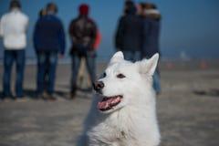 Άσπρο σκυλί με τους ανθρώπους Στοκ Εικόνες