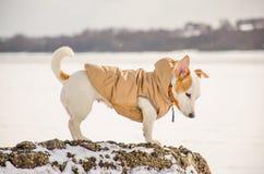Άσπρο σκυλί στη φύση Στοκ Εικόνα