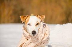Άσπρο σκυλί στη φύση Στοκ φωτογραφία με δικαίωμα ελεύθερης χρήσης