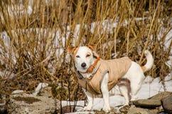 Άσπρο σκυλί στη φύση Στοκ εικόνα με δικαίωμα ελεύθερης χρήσης