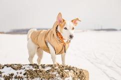 Άσπρο σκυλί στη φύση Στοκ Φωτογραφία