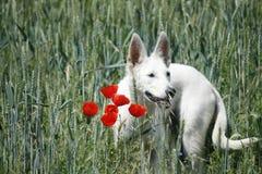 Άσπρο σκυλί Στοκ φωτογραφία με δικαίωμα ελεύθερης χρήσης