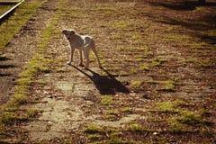 Άσπρο σκυλί στοκ εικόνα