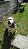 Άσπρο σκυλί Στοκ φωτογραφίες με δικαίωμα ελεύθερης χρήσης