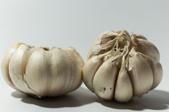 Άσπρο σκόρδο στο άσπρο υπόβαθρο Στοκ Φωτογραφία