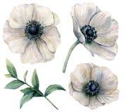 Άσπρο σύνολο anemone Watercolor Χρωματισμένα χέρι λουλούδια με τα φύλλα ευκαλύπτων που απομονώνονται στο άσπρο υπόβαθρο φυσικός Στοκ εικόνες με δικαίωμα ελεύθερης χρήσης