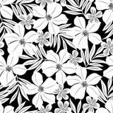 Άσπρο τροπικό λουλούδι σε ένα μαύρο άνευ ραφής σχέδιο υποβάθρου Στοκ Φωτογραφίες