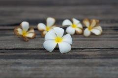 Άσπρο τροπικό λουλούδι στο παλαιό ξύλινο υπόβαθρο grunge Στοκ φωτογραφία με δικαίωμα ελεύθερης χρήσης