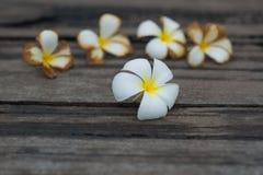Άσπρο τροπικό λουλούδι στο παλαιό ξύλινο υπόβαθρο grunge Στοκ εικόνα με δικαίωμα ελεύθερης χρήσης
