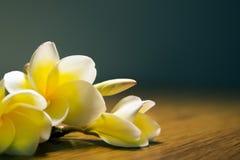 Άσπρο τροπικό plumeria λουλουδιών σε ένα σκοτεινό υπόβαθρο Στοκ εικόνα με δικαίωμα ελεύθερης χρήσης