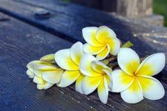 Άσπρο τροπικό plumeria λουλουδιών σε ένα σκοτεινό υπόβαθρο Στοκ Φωτογραφίες