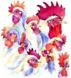 Άσπρο υπόβαθρο αγροτικού watercolor κοτόπουλου γραφικής παράστασης κοκκόρων και κοτόπουλου απεικόνιση κοκκόρων απεικόνιση αποθεμάτων