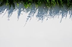 Άσπρο υπόβαθρο θαμπάδων με τη σκιά χλόης Στοκ Φωτογραφία