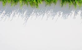 Άσπρο υπόβαθρο θαμπάδων με τη χλόη και τη σκιά ανωτέρω Στοκ Εικόνες