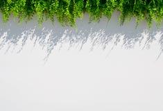 Άσπρο υπόβαθρο θαμπάδων με τη χλόη και τη σκιά Στοκ εικόνα με δικαίωμα ελεύθερης χρήσης