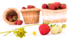 Άσπρο υπόβαθρο καλαθιών φραουλών Στοκ Εικόνες
