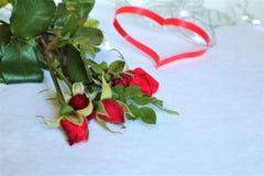 Άσπρο υπόβαθρο με τις κόκκινες καρδιές, τριαντάφυλλα Η έννοια της ημέρας βαλεντίνων στοκ εικόνες με δικαίωμα ελεύθερης χρήσης