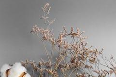 Άσπρο υπόβαθρο με τον κλάδο του βαμβακόφυτου Στοκ εικόνες με δικαίωμα ελεύθερης χρήσης