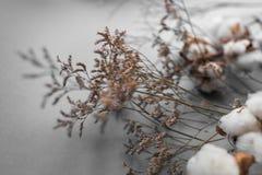 Άσπρο υπόβαθρο με τον κλάδο του βαμβακόφυτου Στοκ εικόνα με δικαίωμα ελεύθερης χρήσης