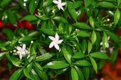 Άσπρο υπόβαθρο λουλουδιών και φύλλων Στοκ Εικόνα