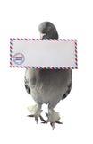 Άσπρο υπόβαθρο φακέλων ταχυδρομείου αέρα περιστεριών φέρνοντας Στοκ εικόνα με δικαίωμα ελεύθερης χρήσης