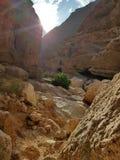 Άσπρο φαράγγι πετρών με το πράσινες φύλλωμα και την ηλιοφάνεια στοκ εικόνα