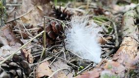 Άσπρο φτερό πουλιών στο δάσος απόθεμα βίντεο