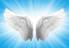 Άσπρο φτερό ngel Στοκ Εικόνες