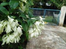 Άσπρο φύλλο στοκ φωτογραφία