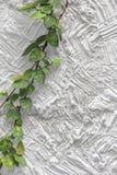 Άσπρο φύλλο τοίχων σύστασης τσιμέντου Στοκ Εικόνες