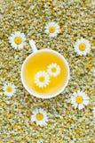 Άσπρο φλυτζάνι του φυσικού chamomile βοτανικού τσαγιού ξηρός Στοκ φωτογραφία με δικαίωμα ελεύθερης χρήσης