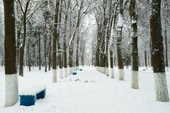 Άσπρο χιονώδες τοπίο στο Winter Park Στοκ φωτογραφία με δικαίωμα ελεύθερης χρήσης