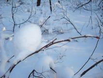 Άσπρο χιόνι στον καφετή κλάδο του δέντρου στο χειμερινό δάσος Στοκ Εικόνα
