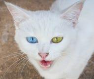 Άσπρο χρώμα ματιών γατών στοκ εικόνα με δικαίωμα ελεύθερης χρήσης