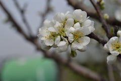 Άσπρο χρώμα Στοκ Φωτογραφία
