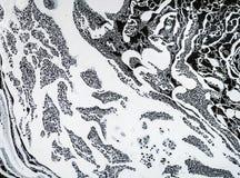 Άσπρο χύσιμο χρωμάτων στο νερό στοκ εικόνα με δικαίωμα ελεύθερης χρήσης