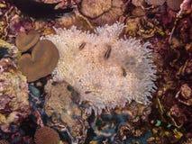 άσπρο anemone στο κατώτατο σημείο Στοκ Εικόνα