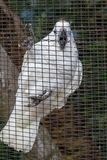 Άσπρο ara παπαγάλων στο κύτταρο Στοκ φωτογραφία με δικαίωμα ελεύθερης χρήσης